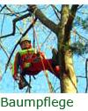 Baumpflege, Seilklettertechnik